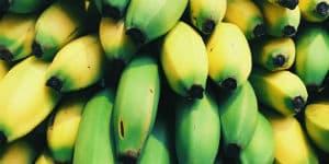 Der er mange bananplantager i Costa Rica