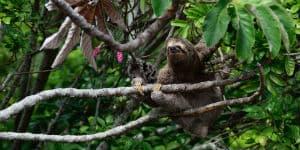 Oplev dovendyr på din rejse til Costa Rica