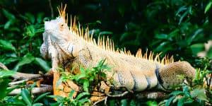 Oplev mange forskellige dyr på din Costa Rica rejse