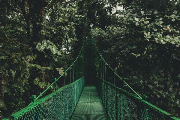 Costa Rica rejser forbindes med de mange hængebroer i Monteverde