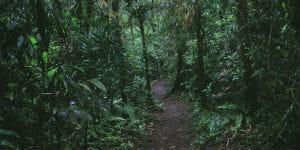 La Fortuna regnskov er en attraktiv seværdighed når rejsen går til Costa Rica
