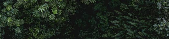 Monteverde set oppe fra