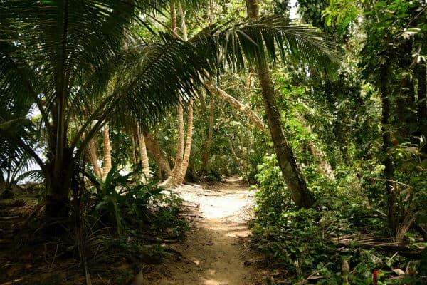Besøg skildpadderne i Costa Ricas nationalpark Tortuguero