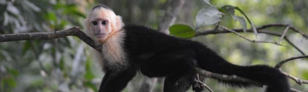 Se mange forskellige dyr på din Costa Rica rejse