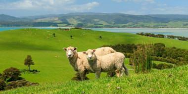 New Zealand dyreliv