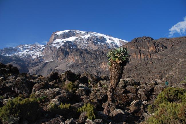Kilimanjaros top