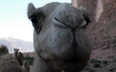 Læs om reglerne for visum, inden du rejser til Marokko