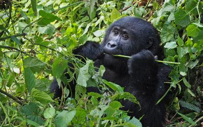 Hav styr på visum inden din Uganda rejse