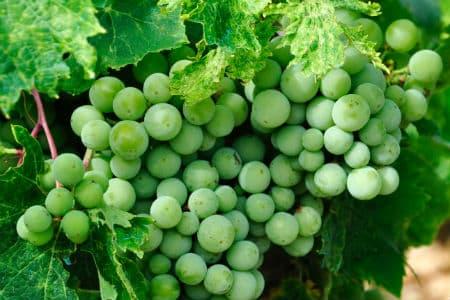 Rejs til Agentina og vinens by Mendoza