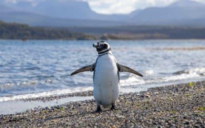 En rejse til Argentina er først fuldført ved verdens ende, Ushuaia
