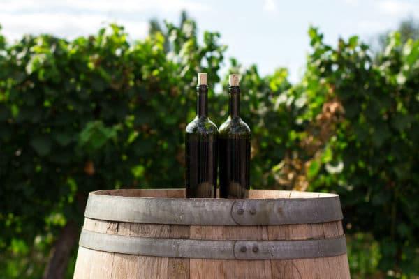 Tag på vinrejse i Argentina og besøg vinens by Mendoza
