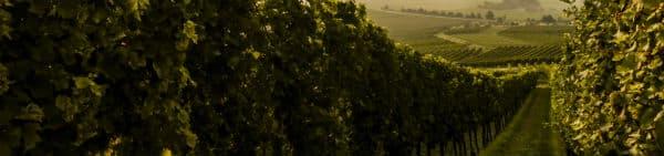 På din Argentina rejse finder du den bedste argentinske vin i Mendoza