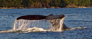 Du kan tage på hvalsafari i Colombia