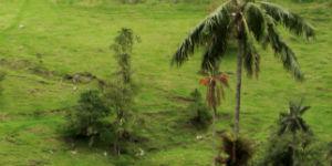 Natur rejser til Colombia er meget populære