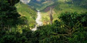 I områder med tæt fauna i Colombia kan der blive meget fugtigt