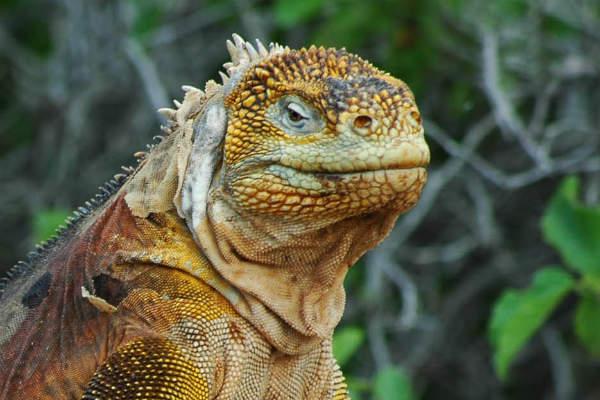 Kom helt tæt på Amazonas junglens mange dyr på din Peru rejse