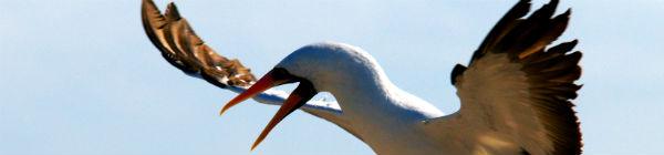 Fugl på Galapagos