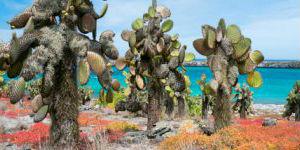 Naturen på Galapagos er meget anderledes, end hvad vi kender hjemmefra