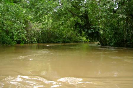 I Amazonas floden er temperaturen meget tropisk