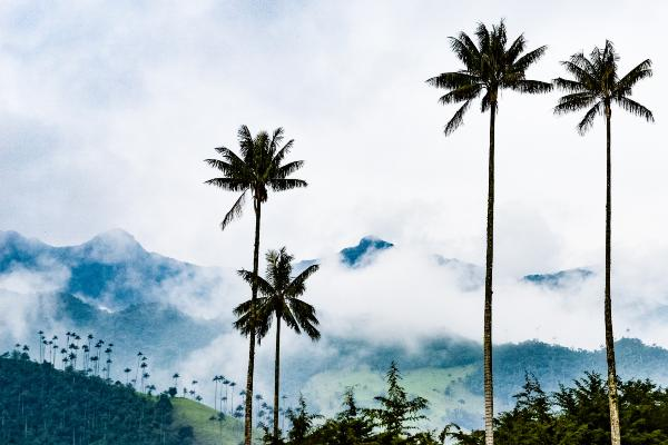 Rejs til Sydamerika og oplev naturen