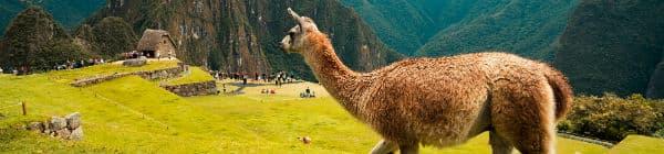 Rejs til Machu Picchu og se alpaca