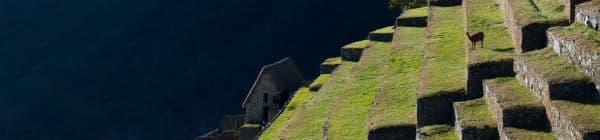 Trek til Machu Picchu vil være dit livs oplevelse