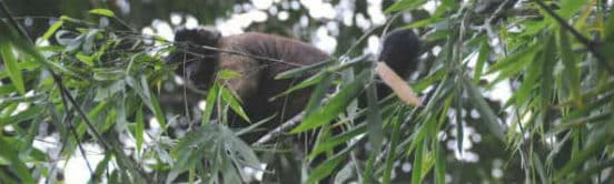 Dyr i Amazonas jungle i Peru