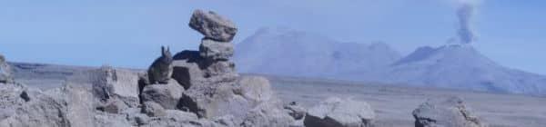 Colca Chivey i Peru