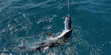 Fiskeri i Storbritannien