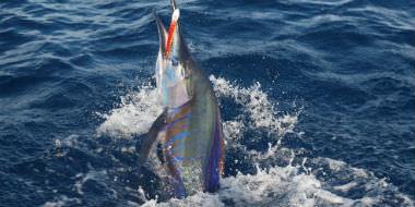 Fiskeri i Sydafrika