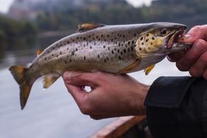 Grupperejser med fiskeri