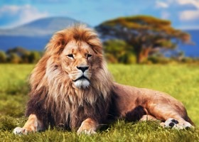 Grupperejser med safari