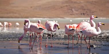 Natur i Bolivia