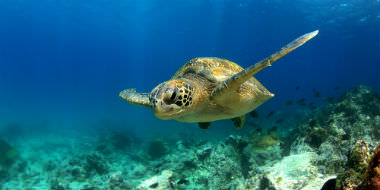 Natur i Ecuador og Galapagos